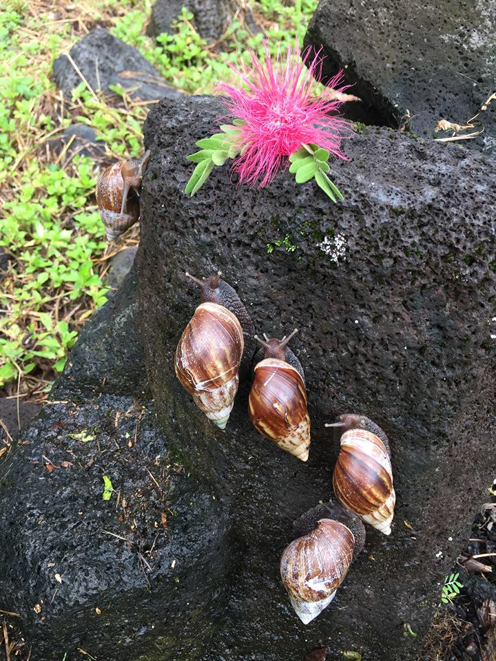 snail rally