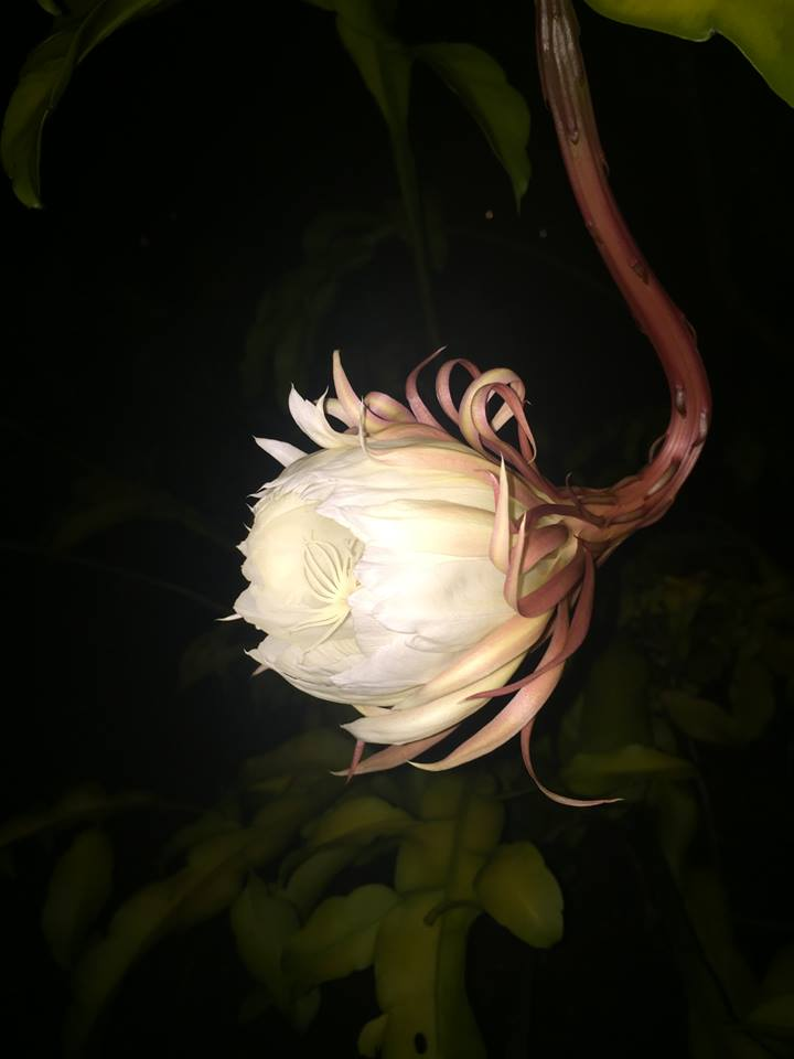 weird flower night
