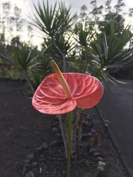 parade flower